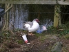 lake-road-feb-07-ugly-duckling-surrounded-by-ulgy-rubbish-001